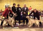 RBIS Southern English Setter Society 2000. Gained her title on the day.